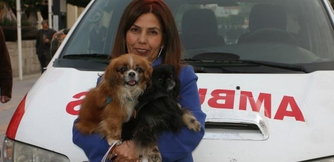 Yaralı köpek için ambulans aldı, belediye teslim edemedi