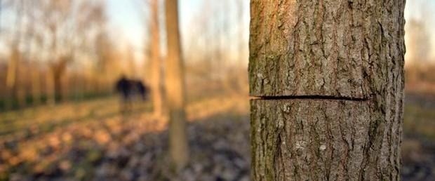 Kestiği ağacın altında kalan hemşire öldü