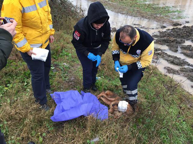 Otomobilin çarptığı köpeğe 112 Acil Servis ekibi müdahale etti
