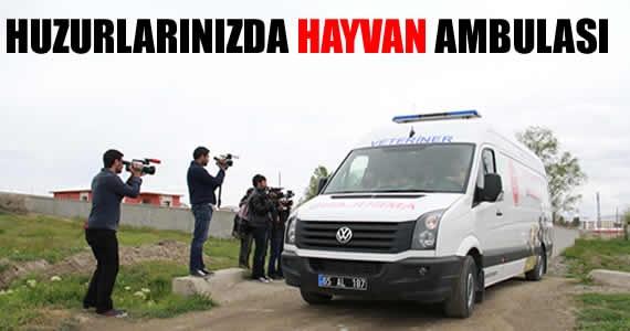 Hayvanlara özel ambulans