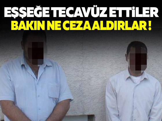 Iğdır'da eşeğe tecavüz eden 2 kişi yakalandı
