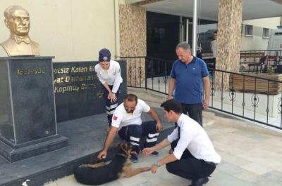 Yaralı köpek 112'ye sığındı