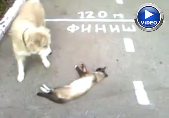 Ölü Taklidi Yapan Kedi (Cat making a dead imitation)