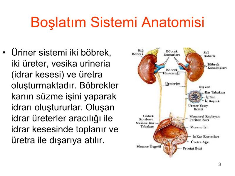 Boşaltım Sistemi Fizyolojisi Ders Notları