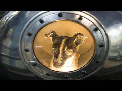 Uzaya Çıkan İlk Köpeğin Kahreden Hikayesi